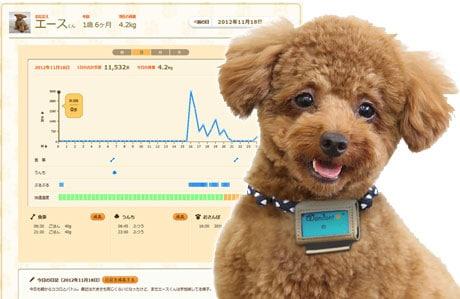 Fujitsu's Wandant dog pedometer reports to a web dashboard via NFC