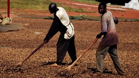Dauntless farmers