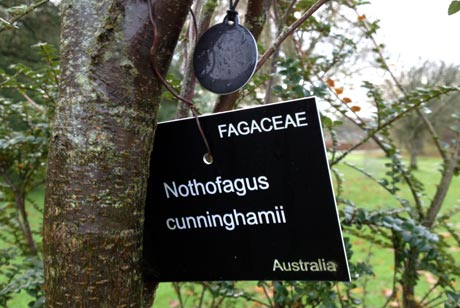 A weather-resistant NFC tag hangs from a tree