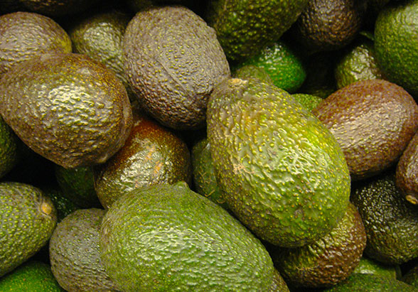 Avocados. Picture by Olle Svensson/Flickr/CC. https://www.flickr.com/photos/ollesvensson/
